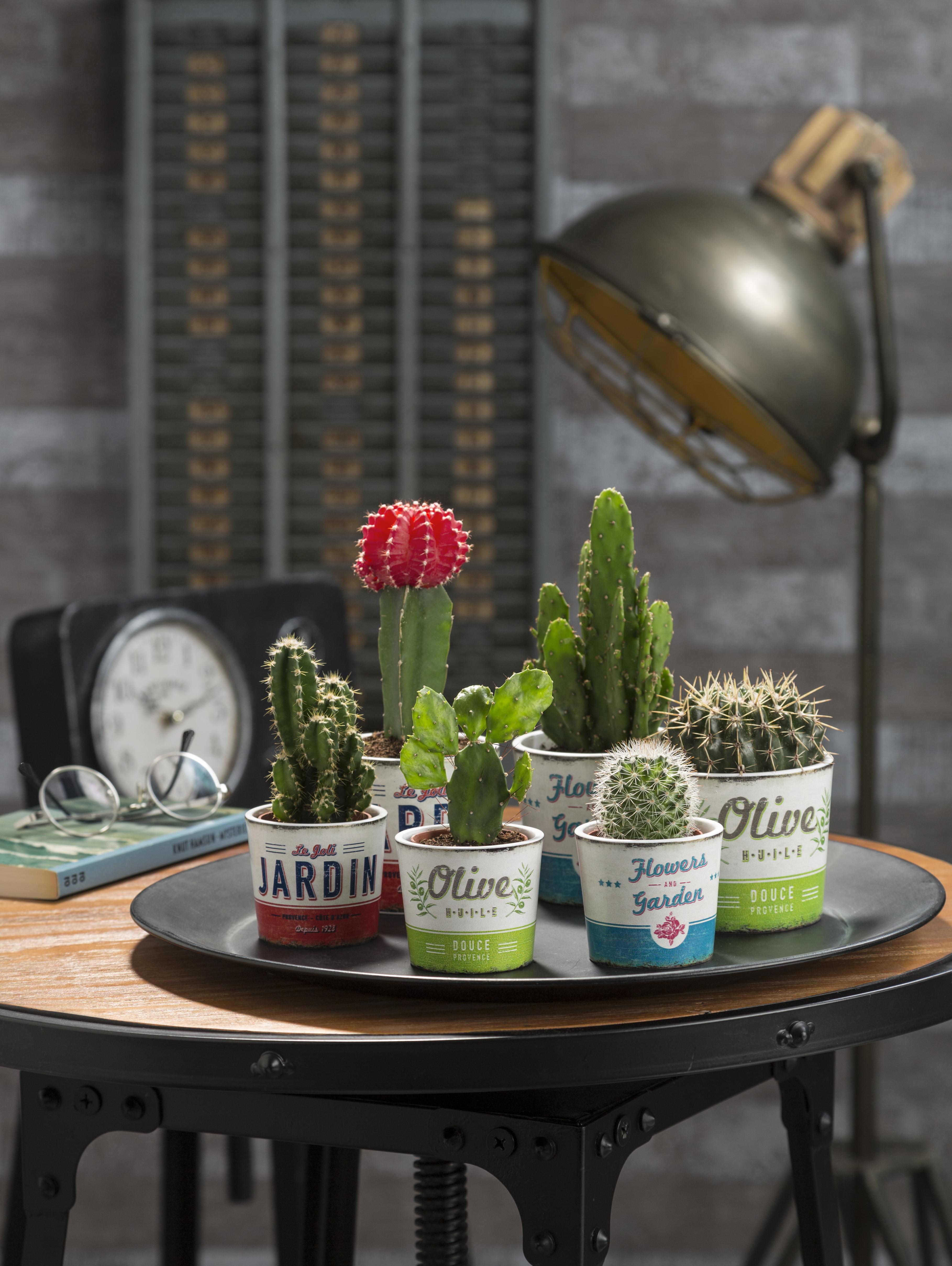 Retro Garden Mini | Scheurich