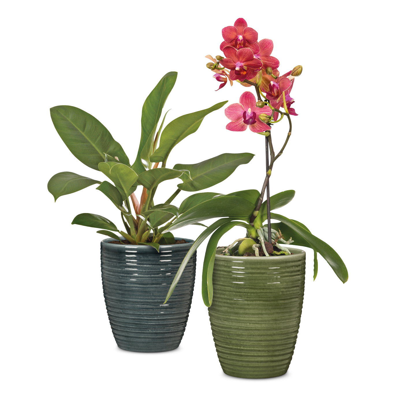 Orchid pots 669 in Glass Olive and Glass Petrol