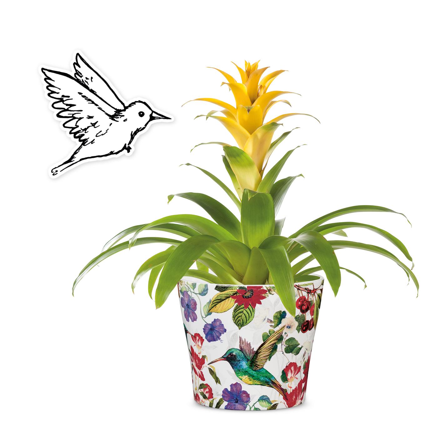 Keramik Übertopf Tropicana mit gelb blühender Zimmerpflanze